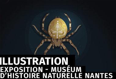 Muséum d'Histoire Naturelle de Nantes- Motion design et parcours interactif