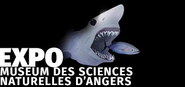 EXPOSITION AU TEMPS DES FALUNS MUSÉUM DES SCIENCES NATURELLES D'ANGERS